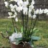 Centro-anastasia-orquidea-fiuncho