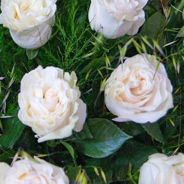 Ramo Impulso 6 rosas blancas - Fiuncho Floristeria a domicilio santiago